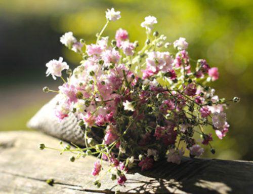 Il Giardino della Pace e della Speranza