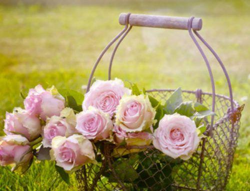 Salva la tua Rosa Antica dall'estinzione